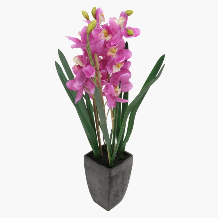 Orchid in Pot 92 cms
