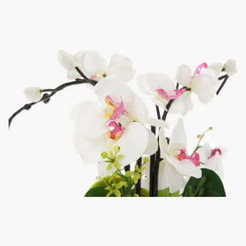 Orchid Potted Plant 69.5 cms