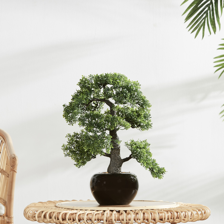 Decorative Bonsai with Pot
