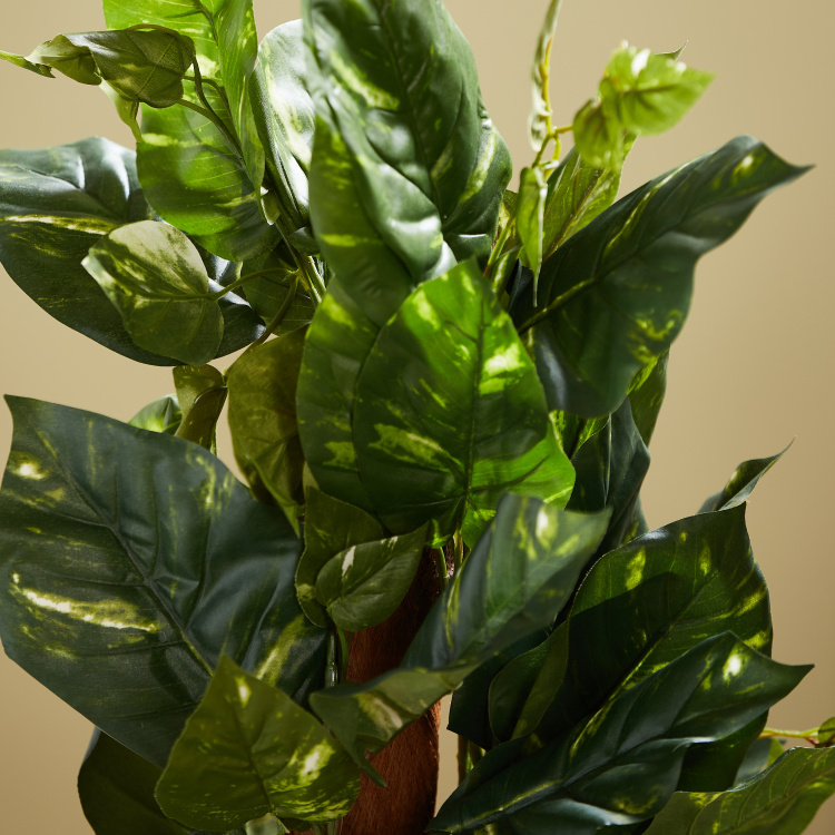 Delux Pothos on Pole in a Plastic Pot 121.92 cms