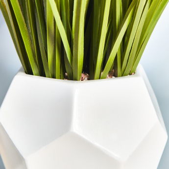 Decorative Grass with Pot