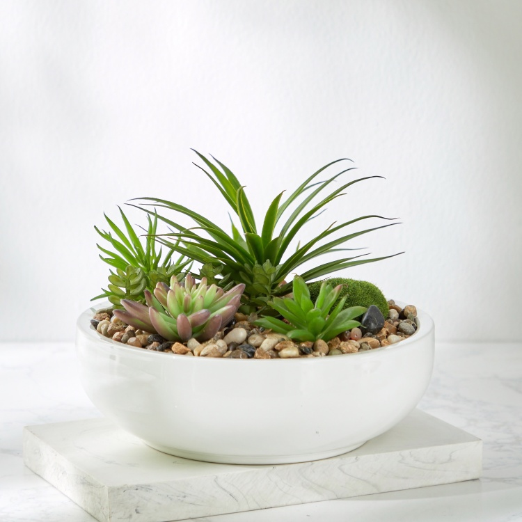 Mixed Succulents with Round Pot