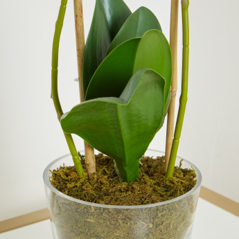 Orchid Arrangement in Glass Pot - 51 cms