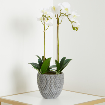 Orchid Arrangement in Concrete Pot - 69 cms
