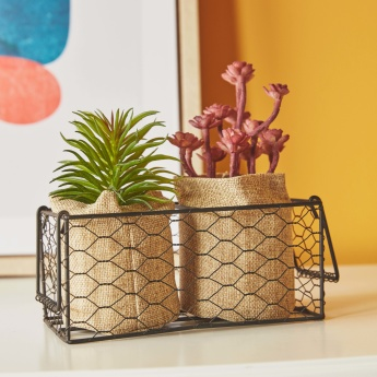 Succulent 2-Piece Plant in Burlap with Tray